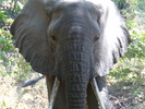 thumbnail for C-LakeManyara